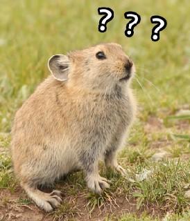 ??? 鼠兔