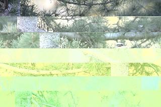 IMG 7535
