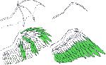 六足类 羽毛