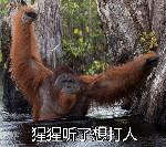 猩猩听了想打人