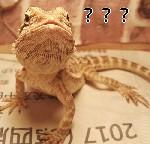 蜥蜴???