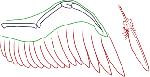 六足类 羽翅